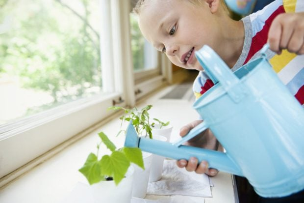 Boy watering plant experiment --- Image by © Rachel Frank/Corbis